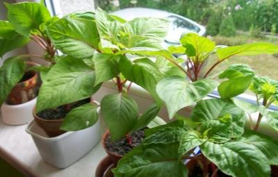 1437575574_rostliny.jpg