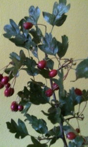 1442321428_neznama-rostlina-bylina-identifikace.jpg