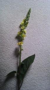 1442778048_neznama-rostlina-bylina-1.jpg