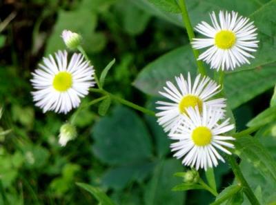 1469800957_neznama-bylina-rostlina-identifikace-jak-zjistit-nazev.jpg
