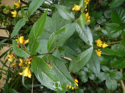 1470146177_neznama-bylina-rostlina-identifikace-jak-zjistit-nazev-2.jpg