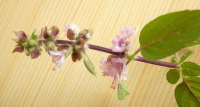 1470157062_neznama-bylina-bylinka-identifikace-jak-zjistit-nazev.jpg