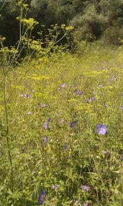 1472201964_neznama-rostlina-bylina-identifikace-podle-fotografie-x.jpg