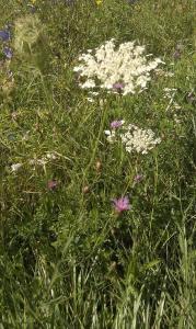 1472201964_neznama-rostlina-bylina-identifikace-podle-fotografie-y.jpg