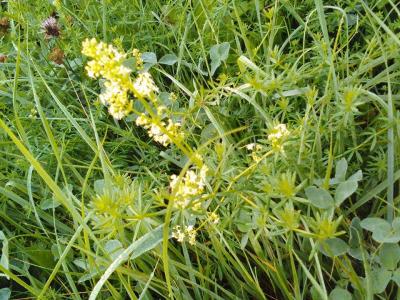 1472398506_neznama-rostlina-bylina-identifikace-podle-fotografie-a.jpg