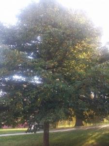 1473703831_neznama-rostlina-bylina-fotografie-nazev-identifikace-uzivani-vyuziti-aaa.jpg