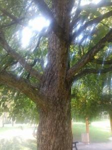 1473703831_neznama-rostlina-bylina-fotografie-nazev-identifikace-uzivani-vyuziti-fff.jpg