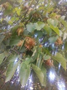 1473703831_neznama-rostlina-bylina-fotografie-nazev-identifikace-uzivani-vyuziti-ggg.jpg