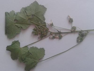 1503997663_poznavacka-neznama-rostlina-bylina-list-kvet.jpg