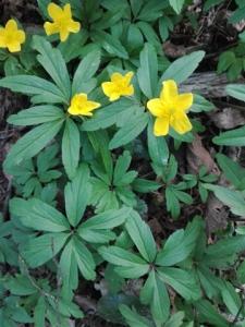 1523337575_poznavacka-rostliny-y.jpg