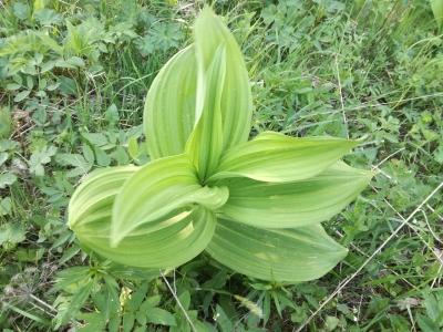 1525623308_neznama-rostlina-bylina-nazev-poznavacka.jpg
