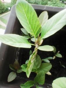 1528617865_neznama-rostlina-poznavacka-nazev-1.jpg