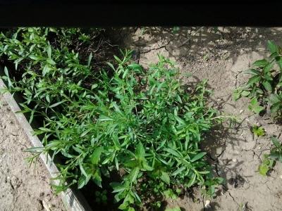1528699189_poznavacka-byliny-rostliny-3.jpg