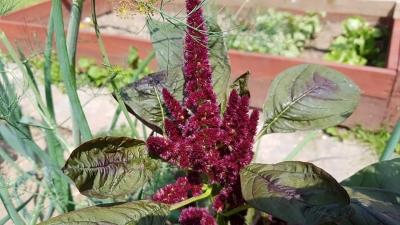 1529317094_neznama-rostlina-bylinka-1.jpg