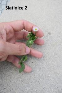 1529957223_botanicka-poradna-neznama-rostlina-foto-fotografie-02.jpg