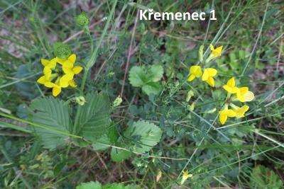 1529957223_botanicka-poradna-neznama-rostlina-foto-fotografie-08.jpg