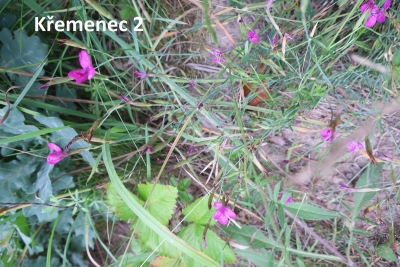 1529957223_botanicka-poradna-neznama-rostlina-foto-fotografie-09.jpg