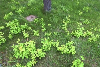 1530605161_botanicka-poradna-neznama-rostlina-foto-fotografie-obrazek-01_1.jpg