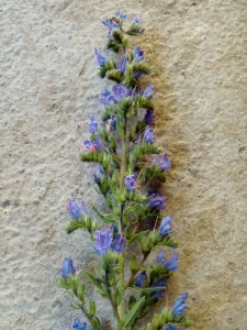 1530645150_jak-se-jmenuje-rostlina-na-fotce-fotografii.jpg