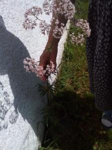 1531398480_jak-se-jmenuje-rostlina-bylina-drobne-ruzove-kvety-ostre-kopinate-listy.jpg
