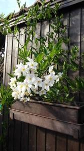 1531991180_neznama-rostlina-bylina-obrazek-fotografie-vyobrazeni.jpg