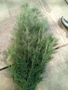 1533026766_neznama-rostlina-bylina-nazev-identifikace-podle-fotografie-obrazku-2.jpg