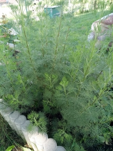 1533026766_neznama-rostlina-bylina-nazev-identifikace-podle-fotografie-obrazku.jpg