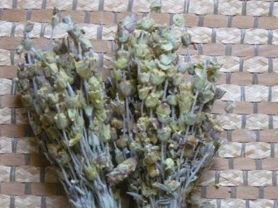 1535810047_neznama-rostlina-bylina-bylinka.jpg