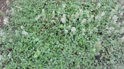 1536562056_neznama-rostlina-bylina-111.png
