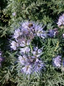 1539522219_jak-se-jmenuje-rostlina-na-fotografii-obrazku-poznavacka-identifikace.jpg