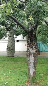 1540845425_cizokrajny-strom-1.jpg