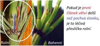 1553234270_preslicka-rolni-bahenni-delka-pochva-delka-kolinka.png