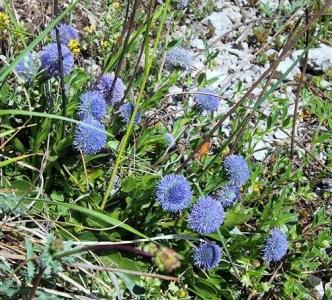 1556287950_neznama-rostlina-byliny-fotografie-identifikace.jpg
