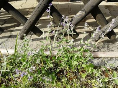 1556466145_neznama-rostlina-bylina-fotografie-obrazek-identifikace-poznavacka-2.jpg