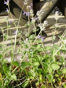 1556466145_neznama-rostlina-bylina-fotografie-obrazek-identifikace-poznavacka.jpg