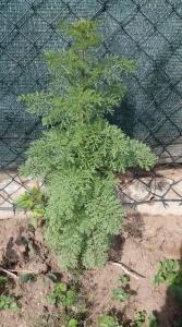 1558027193_neznama-rostlina-bylina-fotografie.jpg