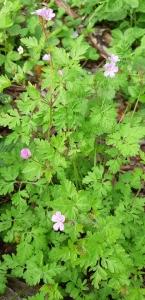 1559894751_fotografie-nezname-rostliny-byliny-3.jpg