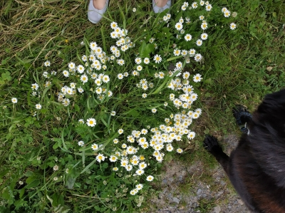 1560074737_neznama-rostlina-byliny-hermanek-2.jpg