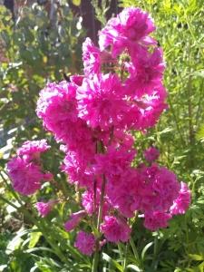 1560287511_neznama-ruzove-kvetouci-rostlina.jpg