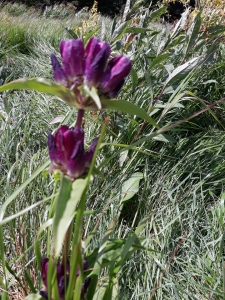 1563896651_neznama-rostlina-bylina-fotografie-poznavacka-2.jpg