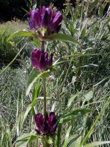1563896651_neznama-rostlina-bylina-fotografie-poznavacka.jpg
