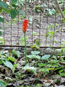 1563963693_rostlina.jpg