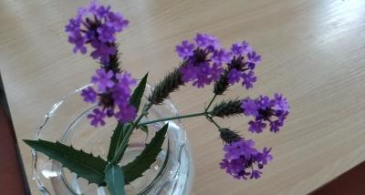 1565636220_neznama-rostlina-se-zubatymi-llisty-a-ruzovymi-kvety-5-okvetnich-listku.jpg