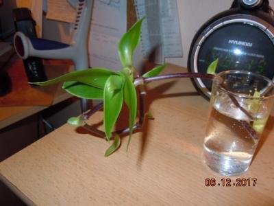 1565977532_bylina-proti-bolesti-2.jpg