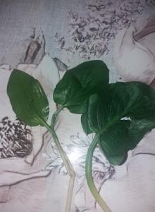 1585208540_neznama-rostlina-byliny-v-lese.jpg